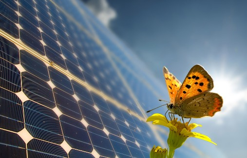 Thanks to Butterfly for Solar Power Efficiency - Green Technology