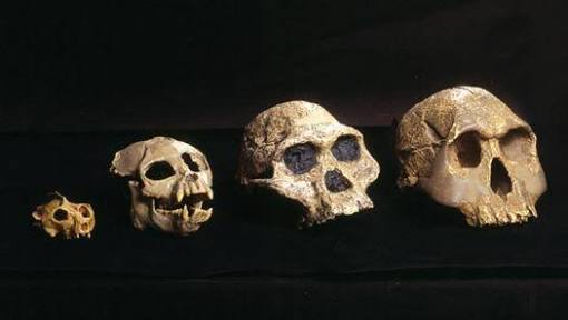 Human Origin, homosapiens, history of humans, new bone structure, st